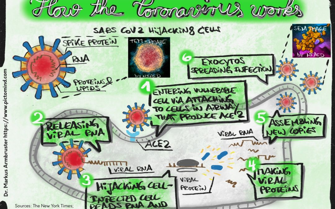 Explanatory drawings: how the Coronavirus works