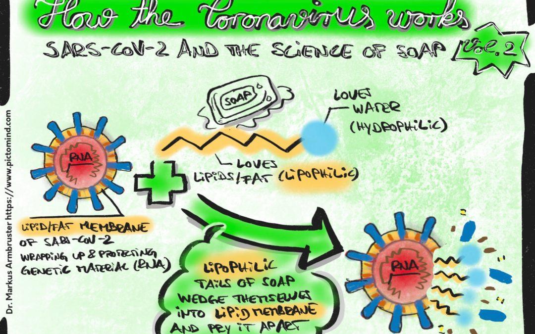 Volume 2 of explanatory drawings around SARS-CoV-2